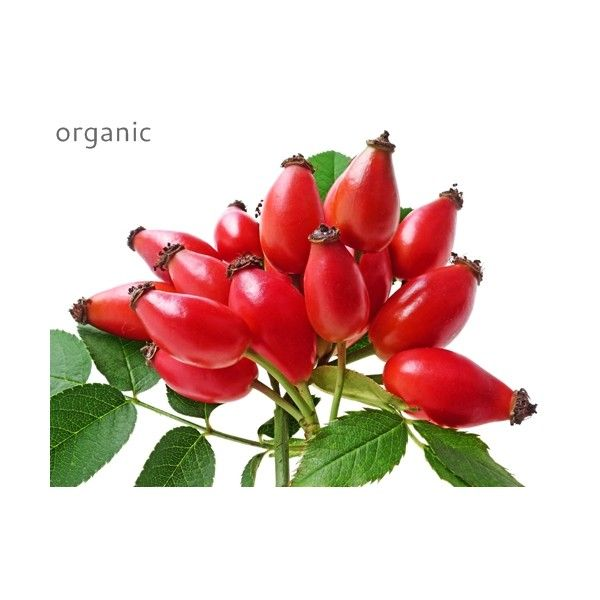 Bunch of beautiful rosehips, packed full of anti-ageing natural skincare properties. Read more at www.herbhedgerow.co.uk.
