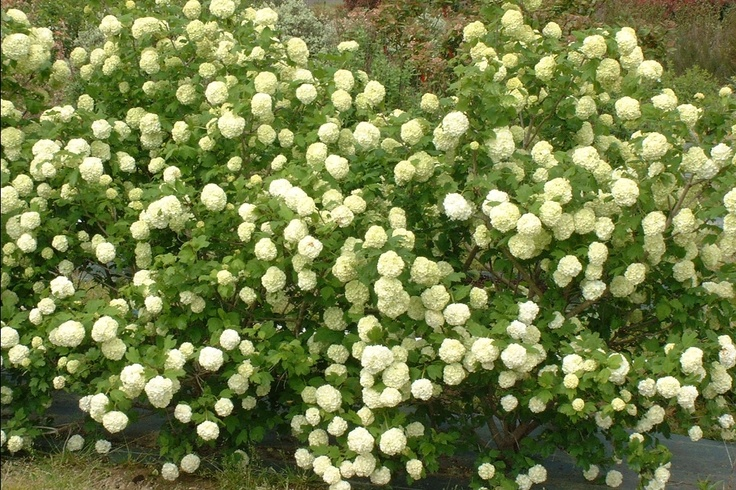 Cochise / Sterile Garden -