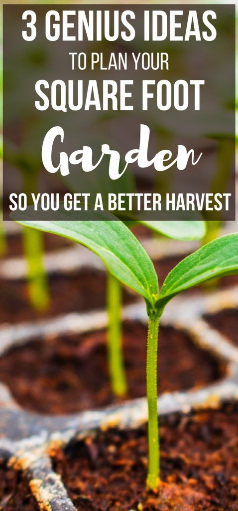 Want an easy square foot gardening for beginners resource and square foot gardening plant spacing ideas? These are 3 genius ideas for square foot gardening plans and square foot gardening layout ideas!