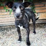 Pepsi!!! <3 • Terrier X • Young • Female • Small. Santa Cruz SPCA, CA. 2 yrs. Please visit our website for adoption procedures. www.spcasc.org    The Santa Cruz SPCA's adoption package for dogs and cats includes spay/neuter, vaccinations, microchip/registration, an ID tag, collar, coupons, a free health exam, 30 days of free pet health insurance, and other animal care materials. Puppies under 1 year of age are $300, dogs over 1 year are $200, and senior dogs are $150.