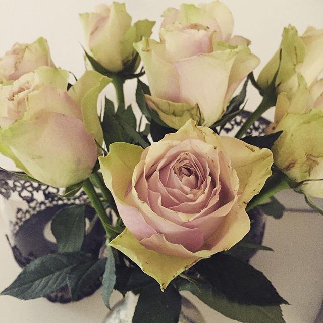 Såå vackra rosor i vintagefärger!  Har stått i 4 dagar nu o är ändå så vackra! 🌹🌹🌹 #rosor #vintage