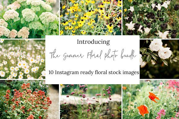 10 Floral Stock Photos for Instagram by RUE PARADIS STOCK on @creativemarket