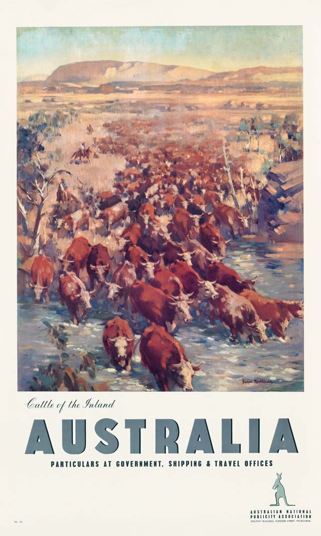 Cattle of the Inland, Australia, 1930s. Published by the Australian National Publicity Association, a government organisation that was formed to promote Australia overseas.