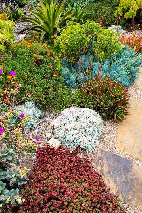 Rock garden succulents; colorful combinations