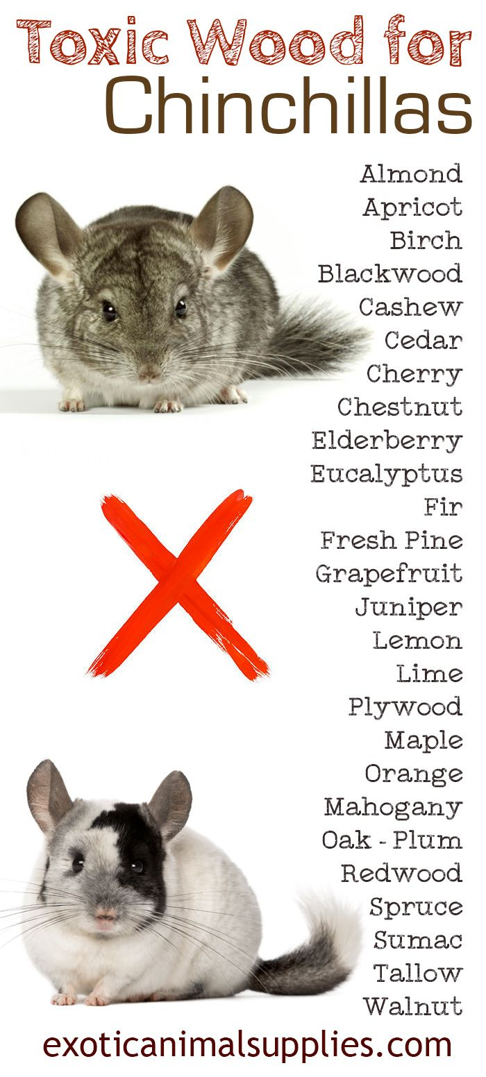 Toxic wood for chinchillas. You should not give your chin any of these unsafe wood items to avoid sickness or death. Do not buy toys, cages, chews, or shelves made from any wood on this list.