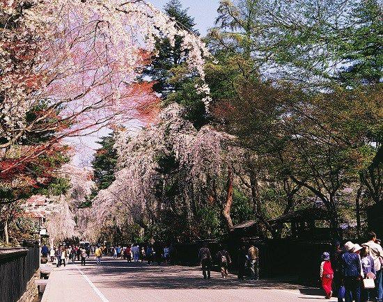 秋田県仙北市の角館町は、みちのくの小京都と呼ばれた城下町。黒塀の続く武家屋敷通りにはしっとりとした情緒が漂い、道路の幅から曲がり角までそのまま残り、藩政時代の面影を今に残す魅力的な街です。そこで今回は、角館町の定番から穴場までの観光スポットや季節のイベント、おすすめの宿などをご案内しながら、秋田・角館町の魅力をご紹介します。