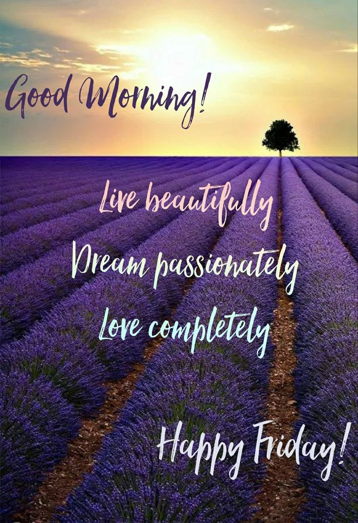 Good Morning! Happy Friday! #goodmorning #morningpost #morning #gm #gmw #morningpost #quotes #quote #meme #memes #memesdaily #coffee #thegrind #happyfriday #fridays #fridaymeme #life #love #live #livelife #lovelife #flowers #purple #tree #sunshine #sun