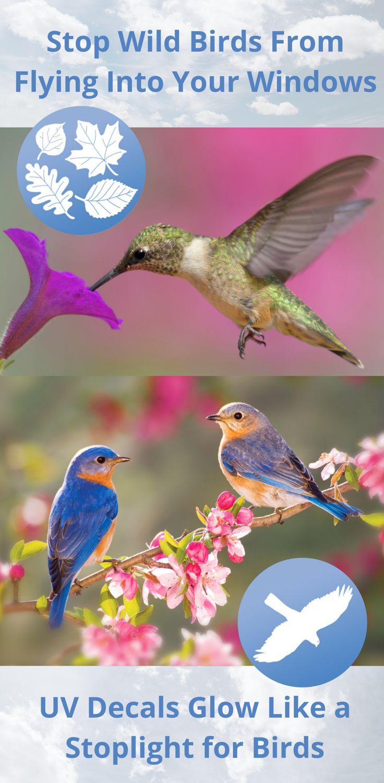 Best Birds Images On Pinterest Birdwatching Decals And - Window stickers to deter birdsstickers to prevent birds flying into windows popular bird