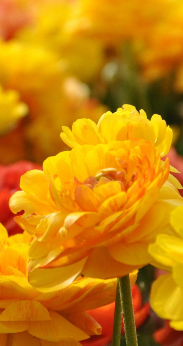 Flowers Wallpapers HD and Widescreen | Spring Flower ...
