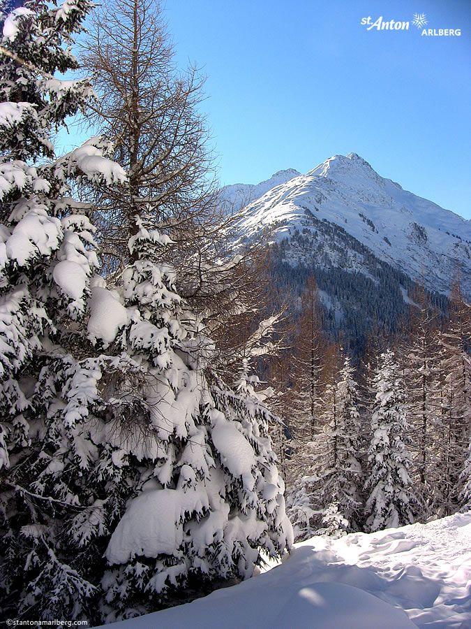 Neuschnee und blauer Himmel im Skigebiet Arlberg
