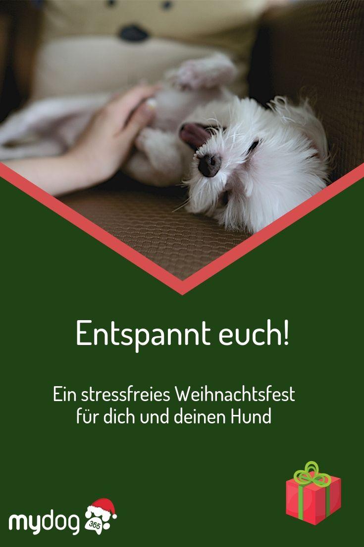 So Machst Du Die Weihnachtszeit Auch Fur Deinen Hund Besonders Hunde Silvester Mit Hund Hund Geschenke