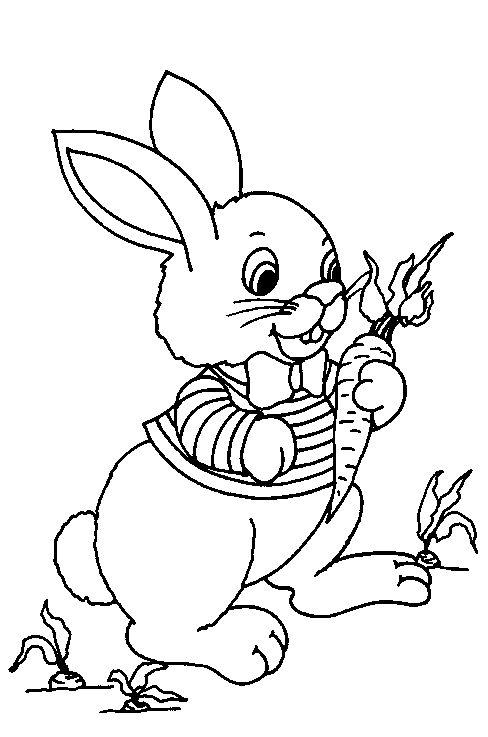 17 beste afbeeldingen konijnen op