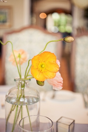 Yellow poppies from Brooke Images