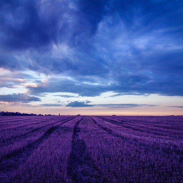 «Фиолетовый закат». Автор фото — Геннадий Кравченко: nat-geo.ru/photo/user/193751/