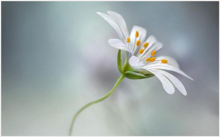 Single Flower Beauty HD Wallpaper | single flower beauty hd wallpaper 1080p, single flower beauty