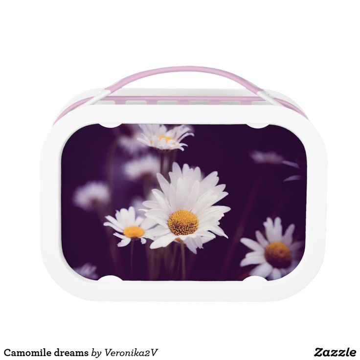 Camomile dreams lunch box. photo, photography, artwork, buy, sale, gift ideas, camomile, flowers, divination, love, violet, purple, liliac, white, dreams, bright, colorful, glow, petals, dark, lunch, breakfast, dinner
