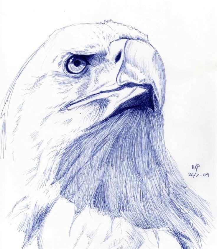Eagle sketch by ~Mathema on deviantART