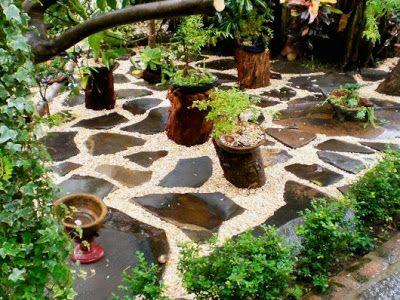 patio jardin pequeo con bonsai
