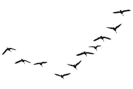 трафарет птицы - Поиск в Google