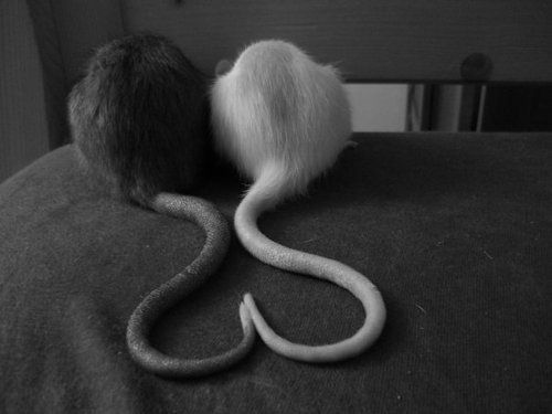 My boys fell asleep with their tails like this the other day, went to get my phone and the fucking thing was dead god do I hate technology sometimes :C                                                                                                                                                      Mehr