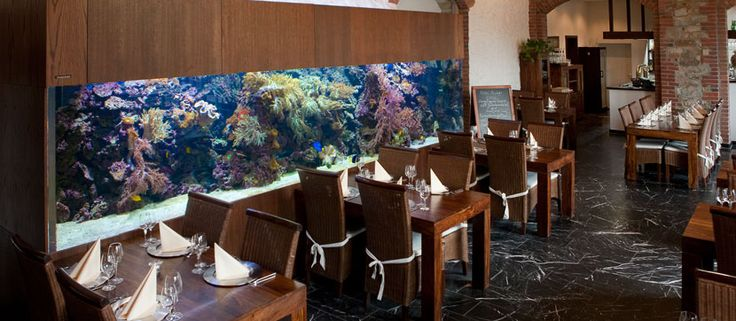 akwarium morskie – AquaMedic Poland Bartosz Blum – akwarystyka morska