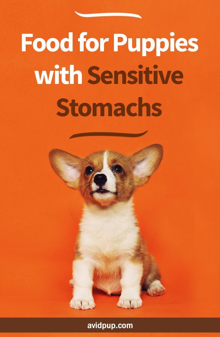 Best Food For Puppies With Sensitive Stomachs Limited Ingredient