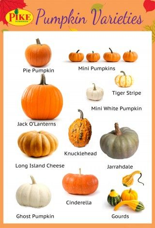 Pumpkin varieties infographic / Pike Nurseries