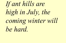 If ant hills are high in July, the coming winter will be hard.