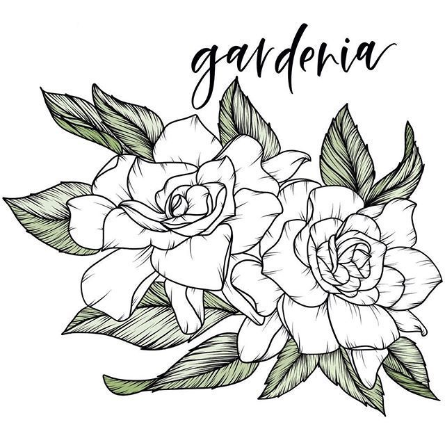 K R Y S T E N L A U R E N On Instagram Gardenia X1f5a4 One Of My Favorites Floralsyourway Floralsy In 2020 Gardenia Tattoo Flower Tattoo Shoulder Flower Drawing