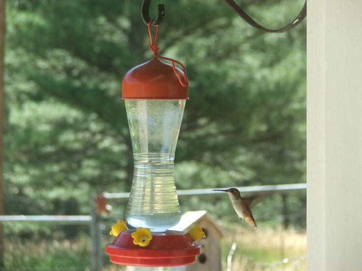 Cukros vízzel itatják, csalogatják a kolibriket. Egyiket éppen elcsíptük.