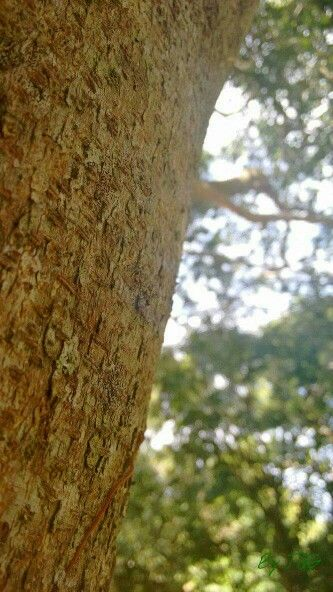 #PuertoRico #PR #Photography #BYJQG #Tree