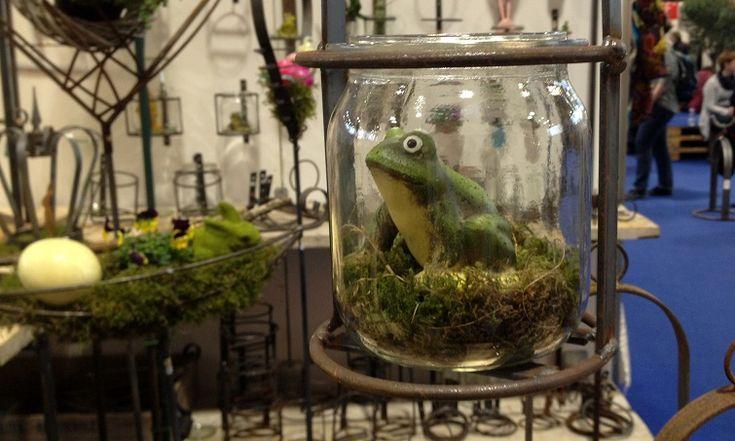 Wetterfrosch Im Glas
