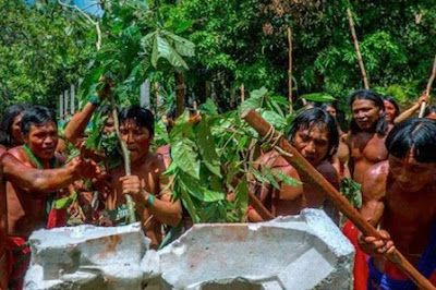 La última batalla de los Wajãpi contra el hombre blanco. Así resiste un pueblo indígena que habita la Amazonia de Brasil hace siglos el decreto presidencial que puede abrir a la explotación minera una enorme reserva. Carla Jiménez   El País, 2017-09-12 https://elpais.com/internacional/2017/09/12/actualidad/1505212940_026324.html
