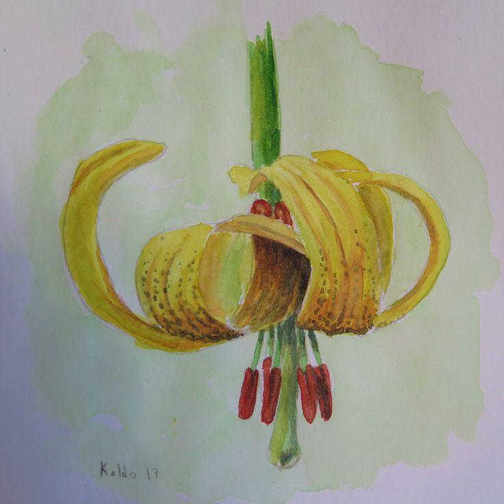 """Azucena del Pirineo. """"Lilium pyrenaicum"""" Acuarela 15x15"""