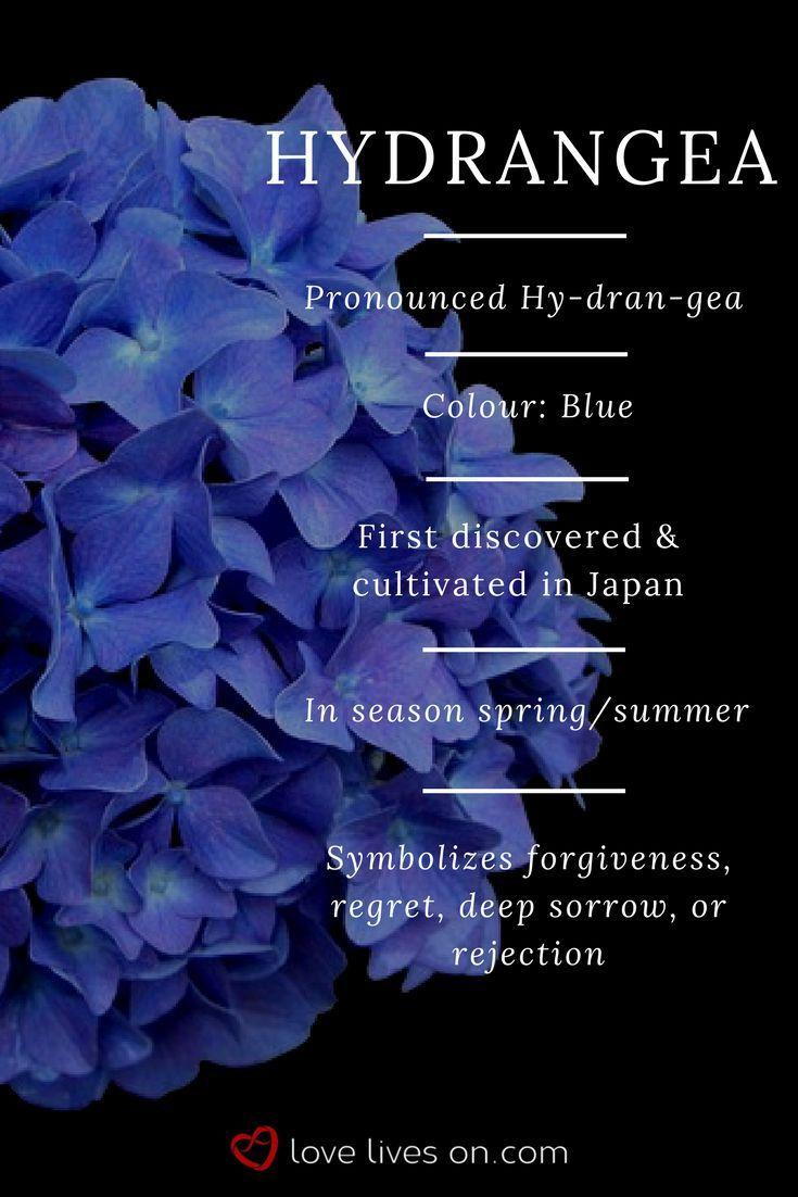 Blue Hydrangea Meaning Blue Hydrangeas Symbolize Forgiveness Regret Deep Sorr Blue Deep Forgiven Funeral Flowers Flower Meanings Flower Garden Plans