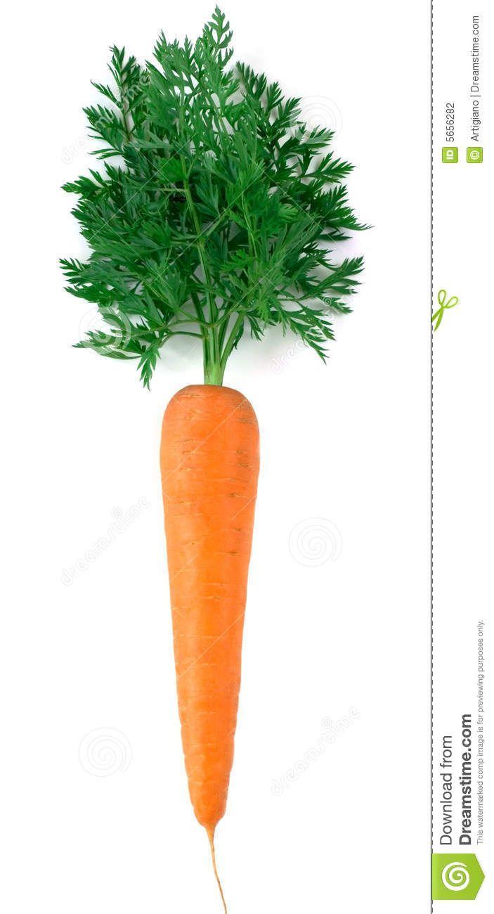 57 Best Images About Carrots On Pinterest Sketchbooks Fruits And Vegetables And Vegetables