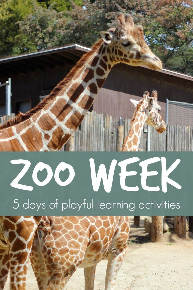 Toddler Approved!: Zoo Week {Playful Learning Activities for Kids} Like this.