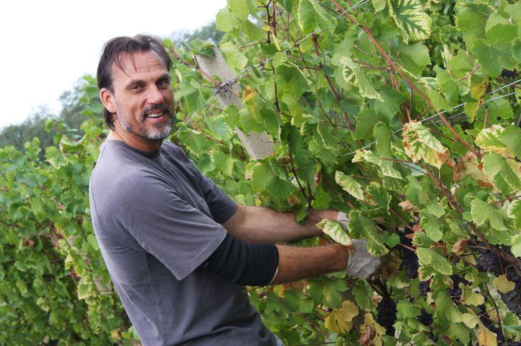Wine Zone: Collio Region: Friuli Venezia Giulia Color: Orange Wine