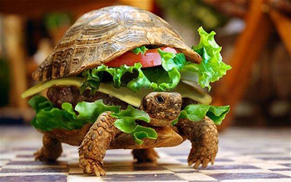 Un chinois déguise sa tortue en burger pour la faire monter dans l'avion | Paris-Burger...