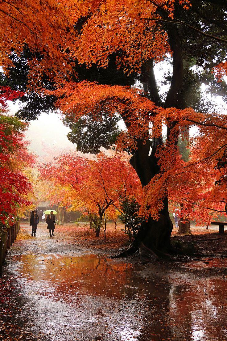 walk in the autumn rain