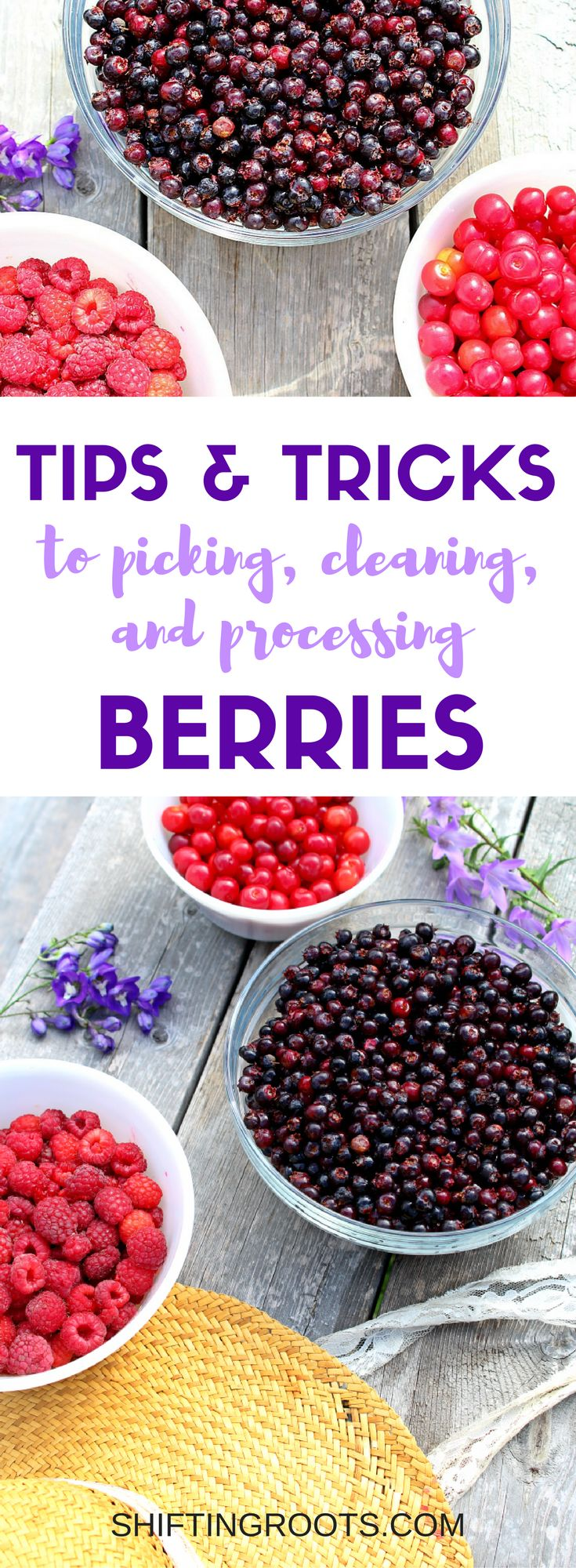 Berry Picking is so much fun, but can be a lot of work. Whether you're working with saskatoon berries, strawberries, sour cherries, or raspberries, I've got plenty of little tips and tricks to help you pick, clean and process with ease. I've also included