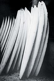 I'm a big fan of surf art. This black and white photo of stacked surfboards is so beautiful.