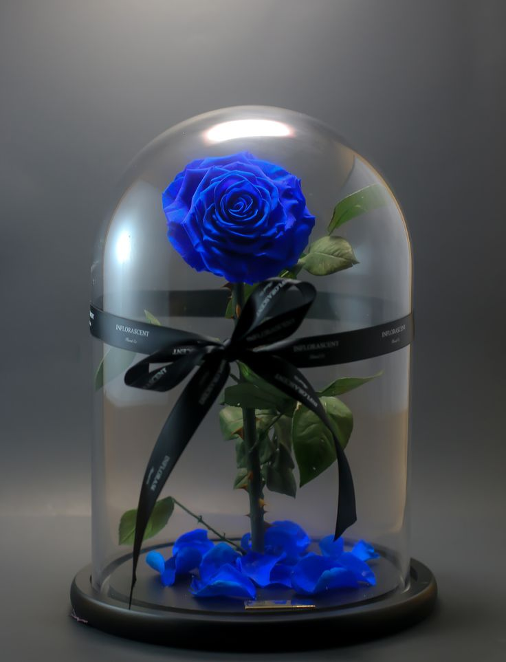 Beauty and the Beast inspire Rose to last over a year! Amazing sapphire blue rose with falling petals. True love is infinite love. What better way to express your love to your special person? The perfect gift for any occasion.