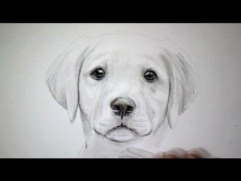 comment dessiner un chien chiot tutodraw comment dessiner