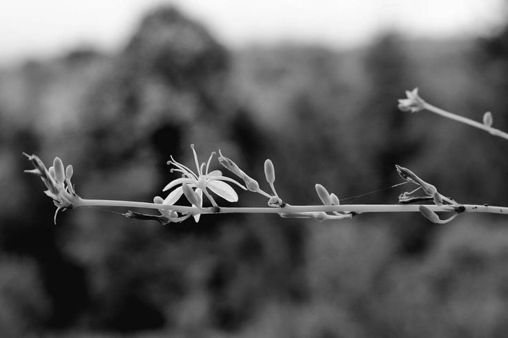 "26 kedvelés, 1 hozzászólás – Hanging Lens📷 (@hanginglens) Instagram-hozzászólása: ""Hanging flower🥀⚫⚪ #flower #mono #blackandwhite #sad #hanging #forest #monochrome #sky #tree #summer…"""