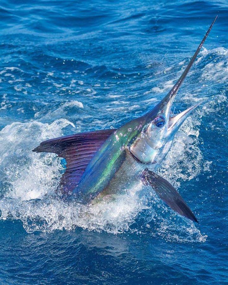 фото рыба меч на удочку компания, которых