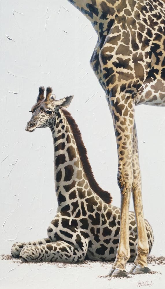 Giraffe Poster Knoxville Zoo 25 X 13 Giraffe Poster African Game African Game Paintings Plains Game Art African Animals Giraffe Animals