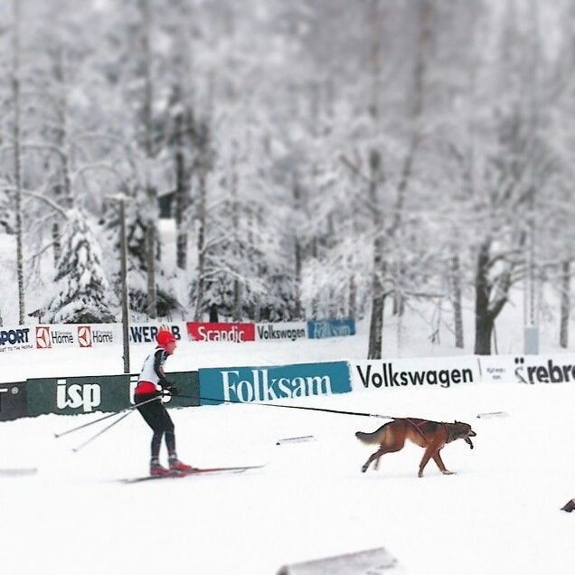 SM -veckan 2015. Team Nystedt Husky