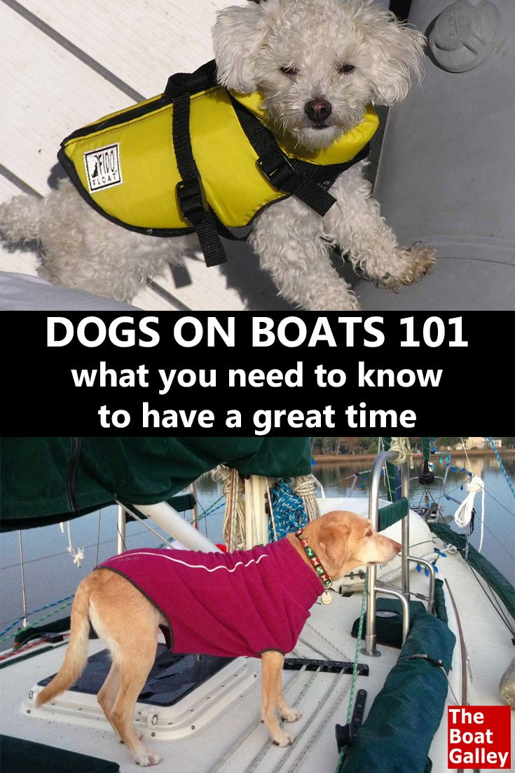 A few things to think about if you're considering taking Rover on the boat, whether for an afternoon or a lifetime. via @TheBoatGalley
