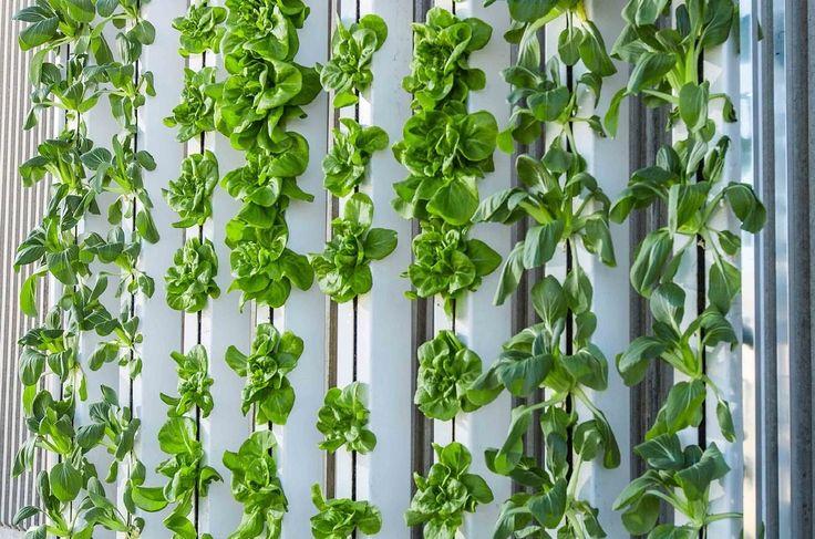 Giardini verticali per decorare le pareti http://www.design-miss.com/giardini-verticali-decorare-le-pareti/ #Giardini verticali, la soluzione perfetta per arredare gli interni e dare un tocco unico all'outdoor!